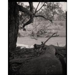 Barkindji Country [Darling River]