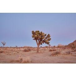 Joshua tree at Dusk Number 1