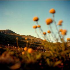 Ngarigo Country