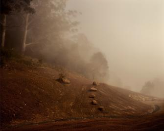 Black Star Kangaroo Valley