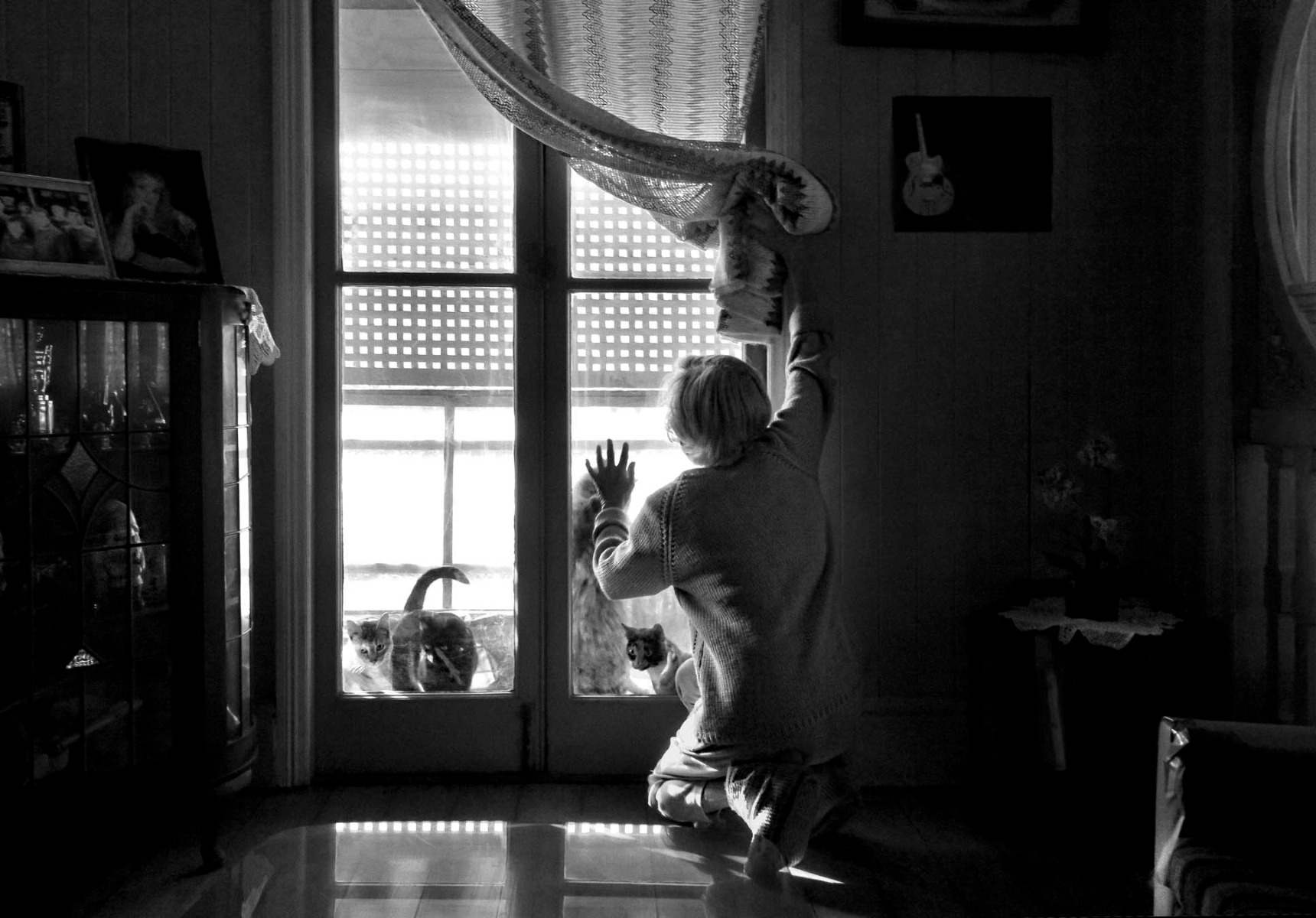 black-and-white-photo-of-child-t-the-window-pulling-away-curtain-with-cats-on-the-other-sode