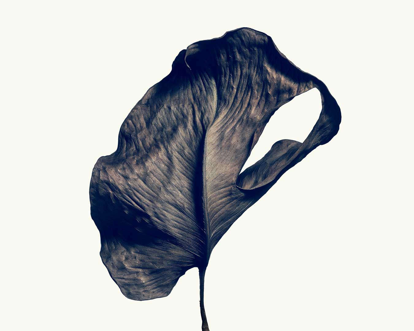 black-and-white-macro-image-of-a monstera-leaf-by-isamu-sawa