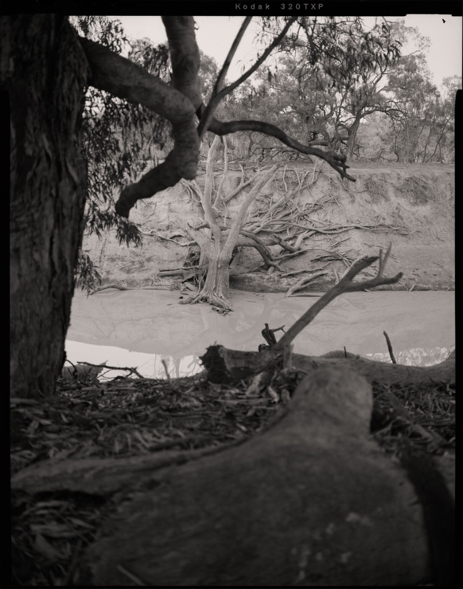 black-and-white-photograph-of-fallen-tree-on-a-riverbed-seeemingly-bleached