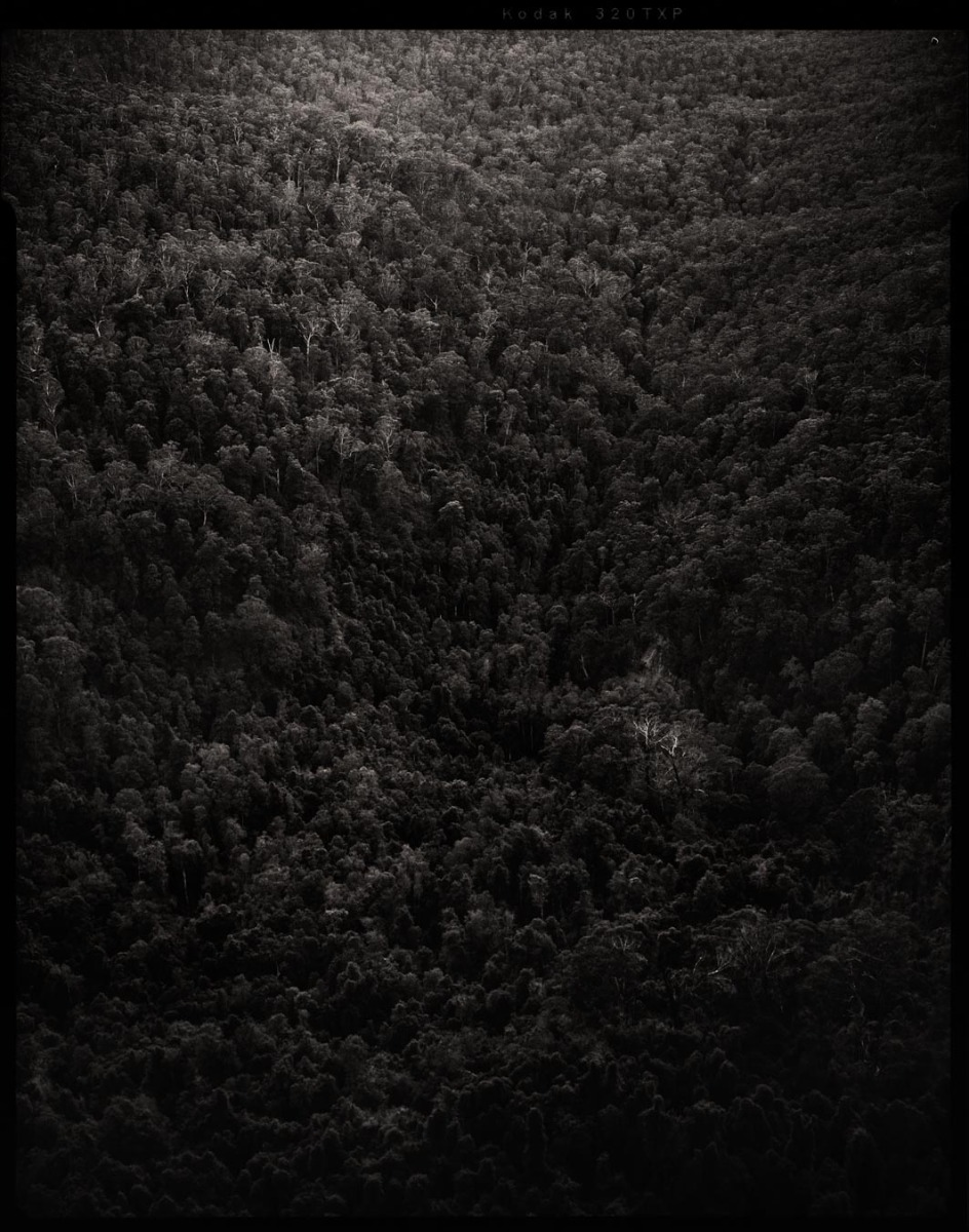 black-and-white-mountain-detail-filled-with-thousands-of-trees