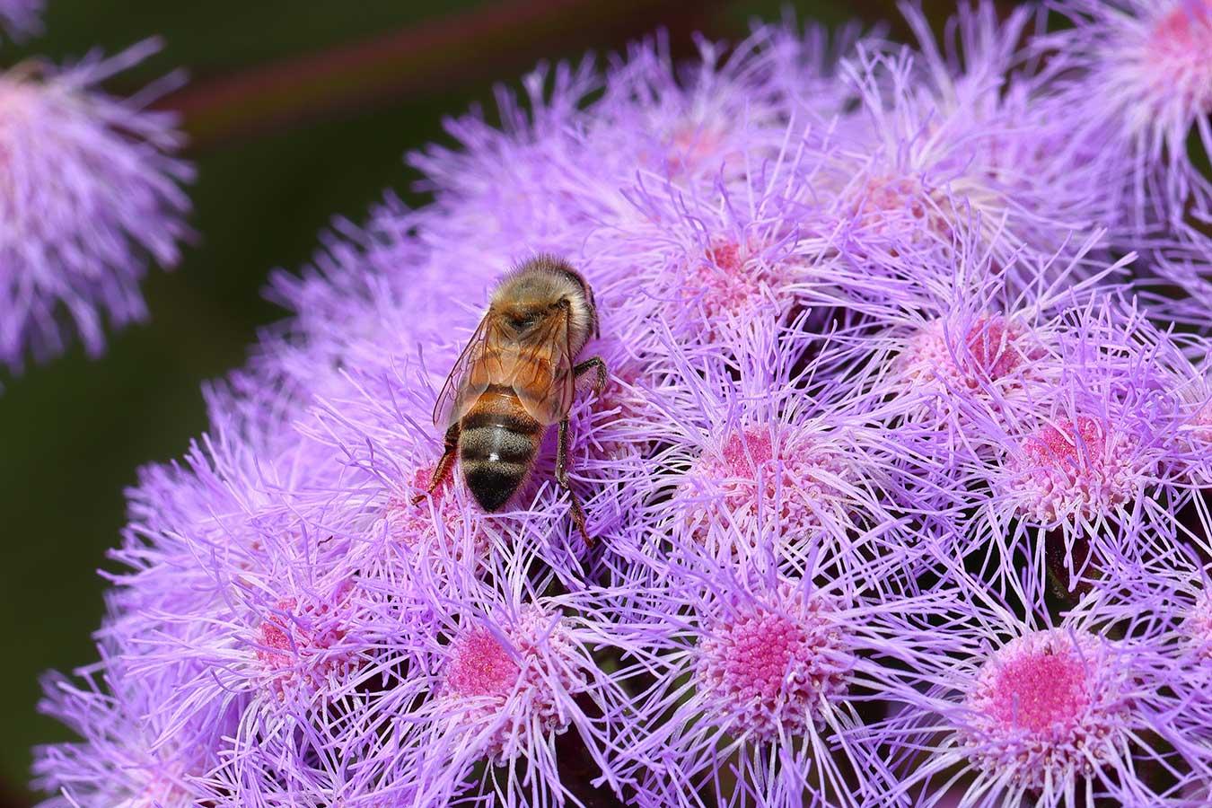 macro-bee-on-flower-by-phillip-reid