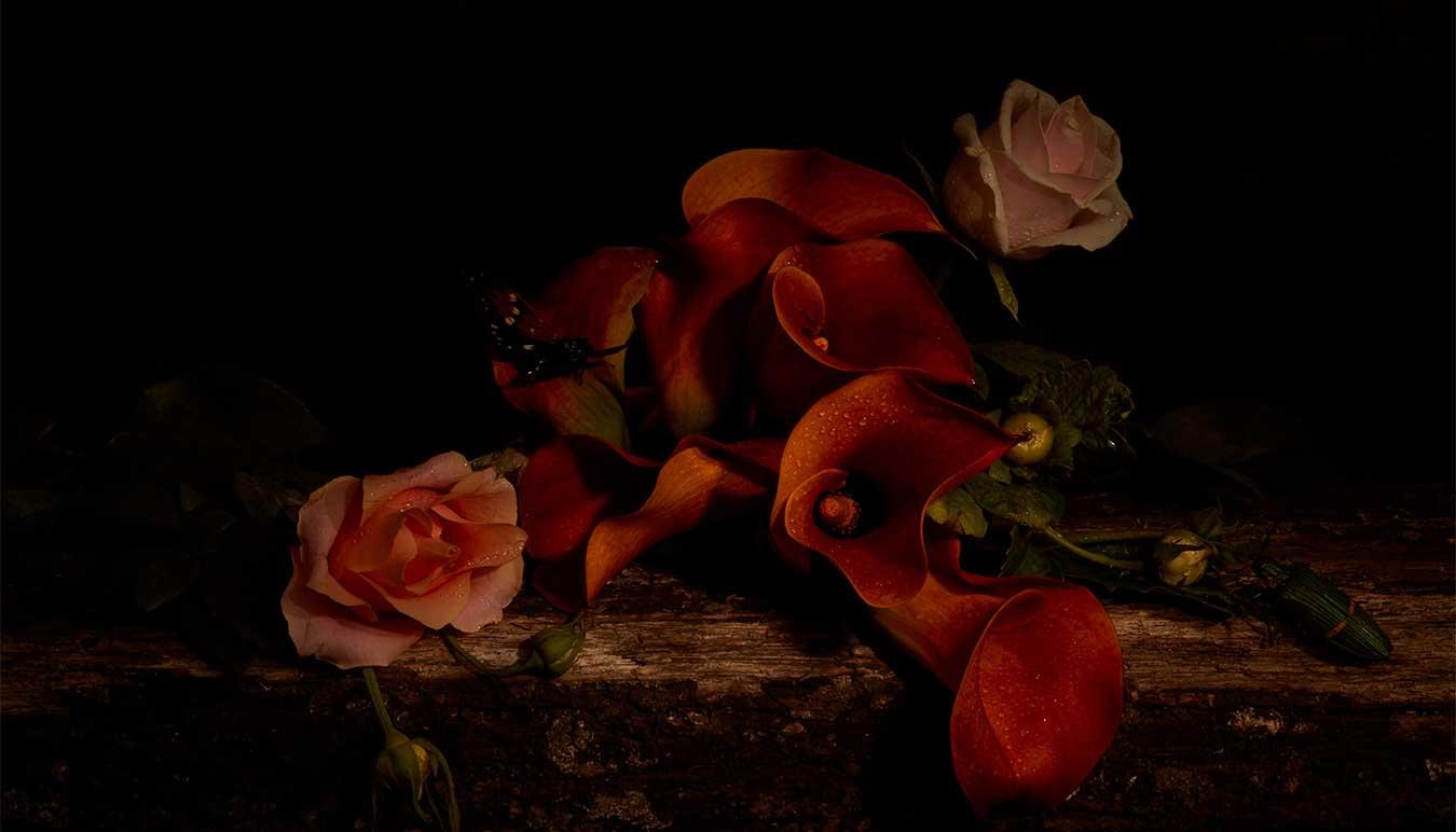image-copyright-richard-nolan-neylan